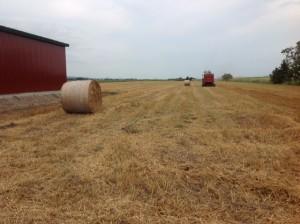 小麦収穫終了