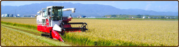 あきよしファームの農業体験